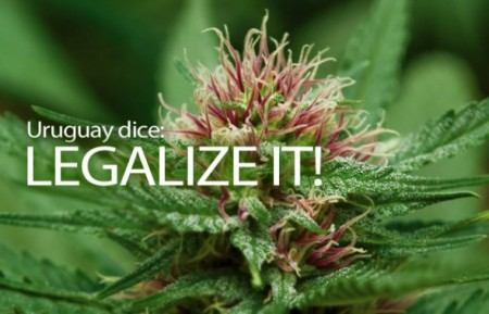 Legaliza!